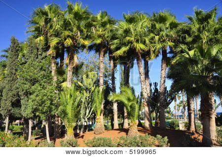 Limassol Oasis