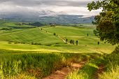Tuscany hilly landscape near Pienza in Italy