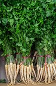 stock photo of turnips  - Parsley bunch - JPG