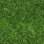 Green grass seamless texture. Seamless in horizontal and vertical dimensions.