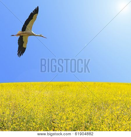 Alone Stork Fly In Clear Blue Sky Over Spring Flowering Yellow Field