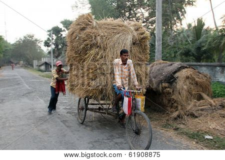 BAIDYAPUR, INDIA - DEC 01 :An unidentified rickshaw rider transports rice from the farm home on Dec 01,2012 in Baidyapur, West Bengal, India. Cycle rickshaws were introduced in to India in the 1940's.