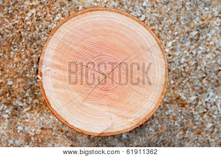 Firewood Cutting Log
