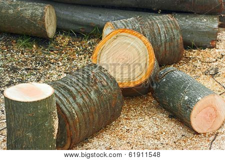 Firewood Cutting Logs