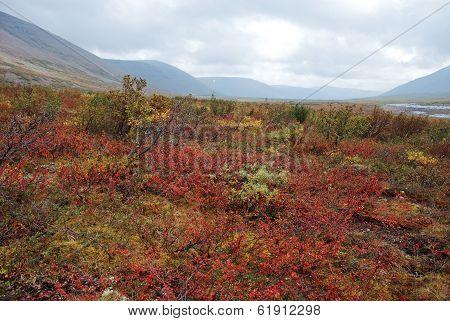 Colorful Tundra.