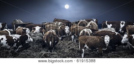 Group Of Bovines In Deep Winter
