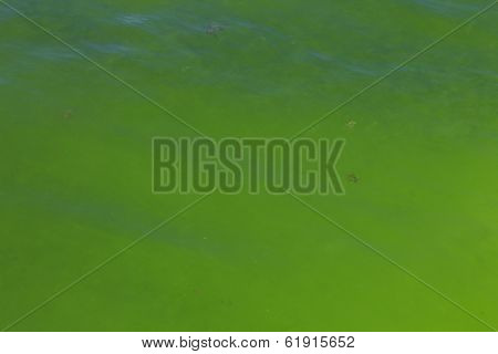 Green Algae in Sea due to Pollution and Global Warming