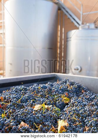 cabernet sauvignon vinemaking with grapes and Fermentation stainless steel tanks vessels