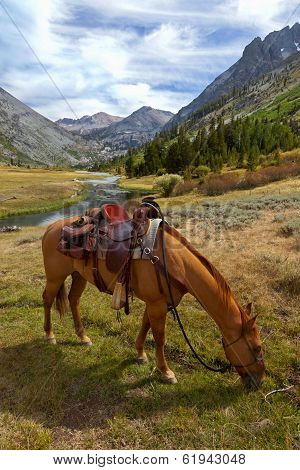Mountain Horse Under Saddle