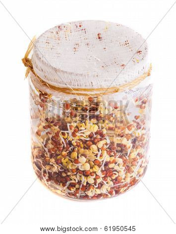 Top View Of Sprouting Radish Seeds Growing In A Jar