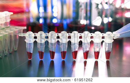 Ubes For Dna Amplification By Pcr