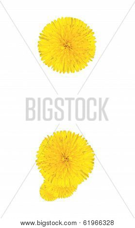 Punctuation Marks Made From Dandelion Flower