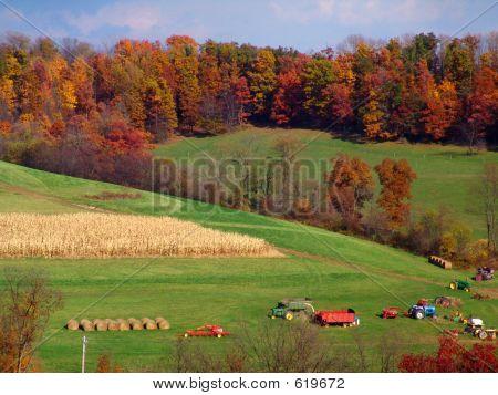 Farm10