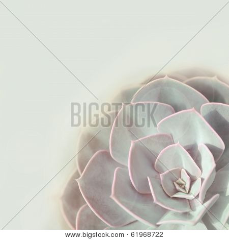 Green plant stone rose
