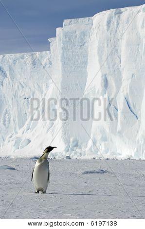 Penguin With Iceberg
