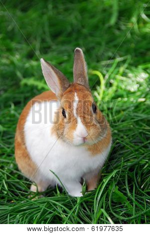 Cute bunny rabbit sitting outside in green grass