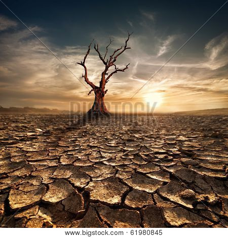 Global Warming Concept. Lonely Dead Tree Under Dramatic Evening Sunset Sky At Drought Cracked Desert
