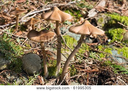 Spring Mushrooms In The Forest