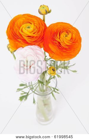 Orange And Pinkish Buttercups In Glass Vase On White