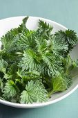 image of sting  - Close up of freshly cut stinging nettles - JPG