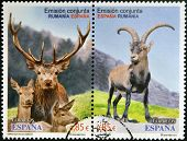 SPAIN - CIRCA 2012: Stamps printed in Spain shows ibex and red deer of the Carpathian circa 2012