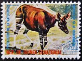 EQUATORIAL GUINEA - CIRCA 1974: Stamp printed in Guinea shows Okapi Africa