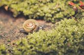 picture of garden snail  - Snails and moss macro shot in the garden or forest