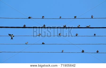 Five Wires Of Powerline Create Stave With Swallows As Notes