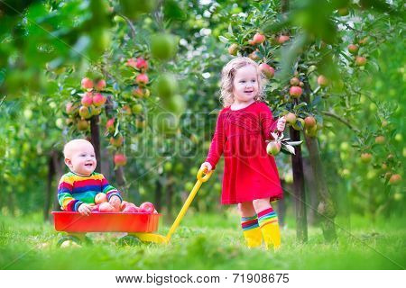Kids Playing In Apple Garden