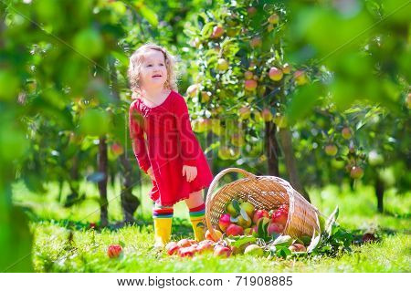 Little Girl Next To A Tipped Over Apple Basket