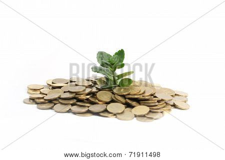 Green sprout and Russian rouble