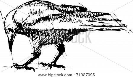 Crows Vector Pen Drawing.