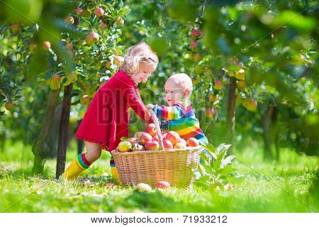 Kids Picking Apples In A Garden