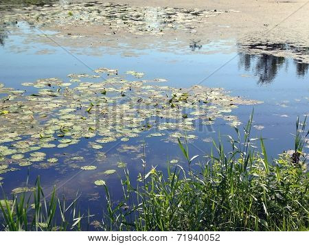 The Lake With Water-lilies