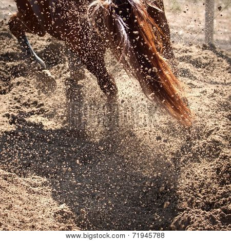 Sand And Dust Behind Horse Hooves