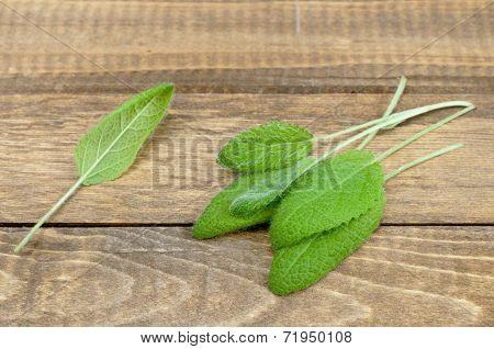 Organic Sage
