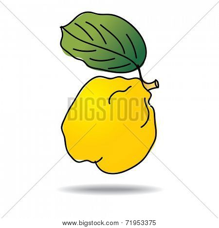 Freehand drawing quince icon - vector eps 10 illustration