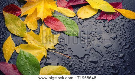 Wet Leaves Yellow Red Green