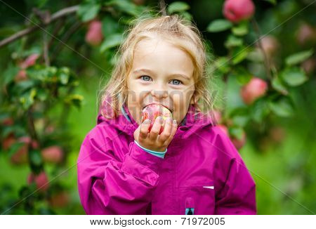 Little girl biting apple in the garden