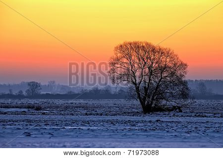 Tree at sunset in winter