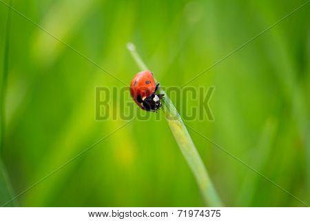 close up of ladybug on grass