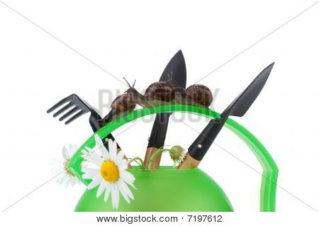 Garden Snail And Watering Can