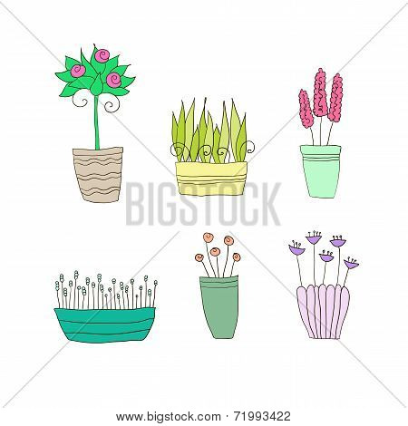 pot plants with flowers and leaves