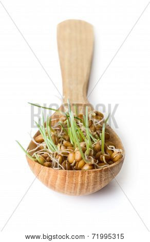 Germinated Grain
