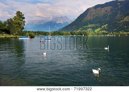 Swans on Zeller Lake, Zell am See, Austria