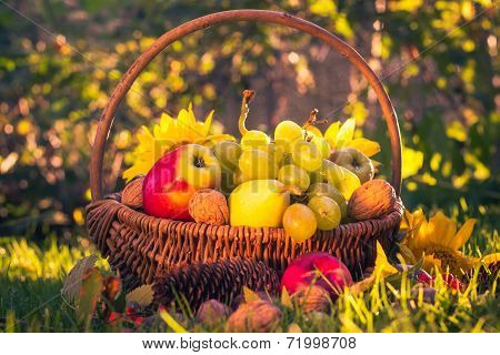 Autumn Orchard Basket Fresh Fruit Sunlight