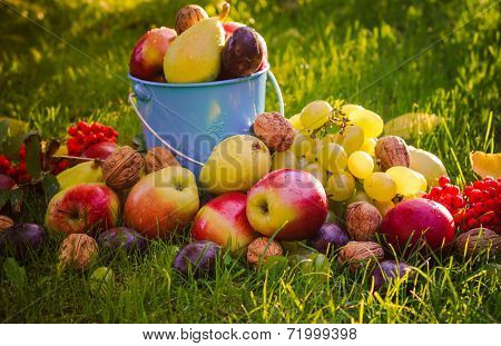 Sad Autumn Summer Fruits Grass Sunshine