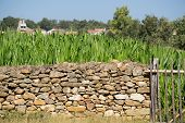 stock photo of old stone fence  - Stone wall and vintage Corn Plantation - JPG