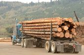 picture of logging truck  - A log truck delivers a load of logs to the log yard at a lumber processing mill that specializes in small logs - JPG