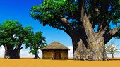 picture of baobab  - African village With baobabs and hut - JPG